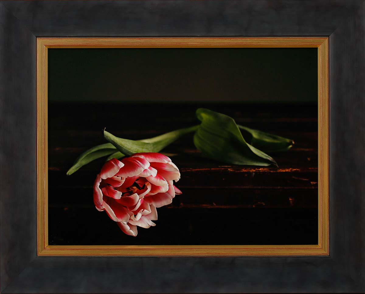 """Tulip 1: Fine art print 38x28cm. Including frame 51x41cm. Including """"Image clear glass""""Edition 1 out of 10. With numbered certificate. € 295,-"""