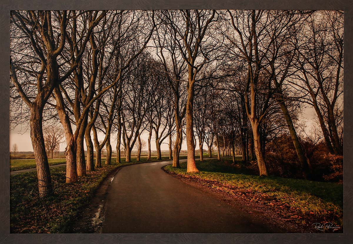 "Walnut trees: Fine art print 91x61cm. Including frame 97x67cm. Including ""Image clear glass""Edition 1 out of 10. With numbered certificate € 945,-"