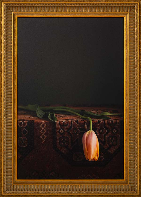 Dying Tulip: Fineart print 50x75cm inc. frame 88x62cm € 695,-