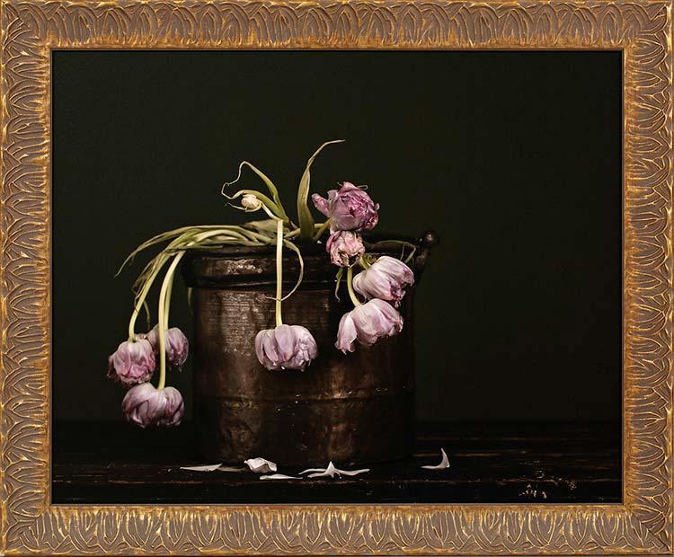 Perish Tulips: Fineart print 40x50cm inc. frame 48x58cm € 396,-