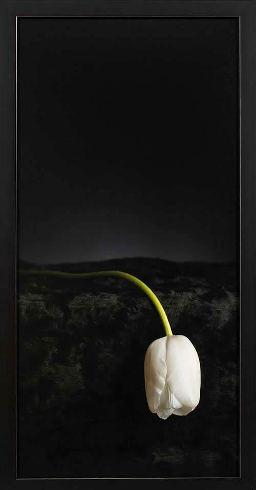White Lady: Fineart print 30x60cm inc. frame 33x63cm € 395,-