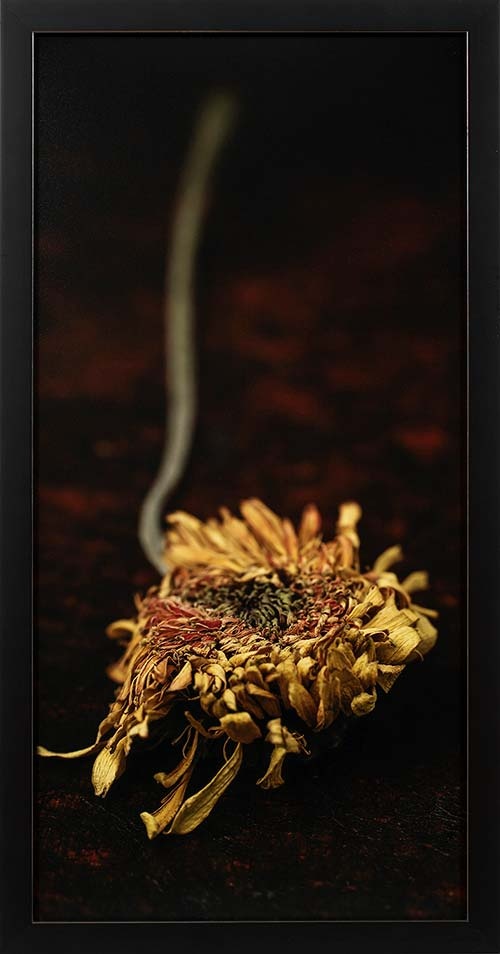 rob-pluijm-fine-art-flowers