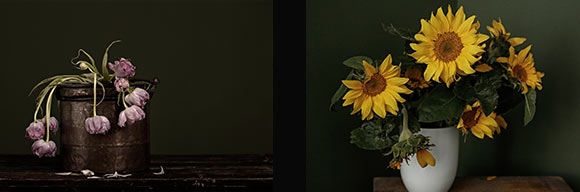 flowers-decay-exposition sunflowers